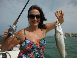 Sarasota speckled trout fishing