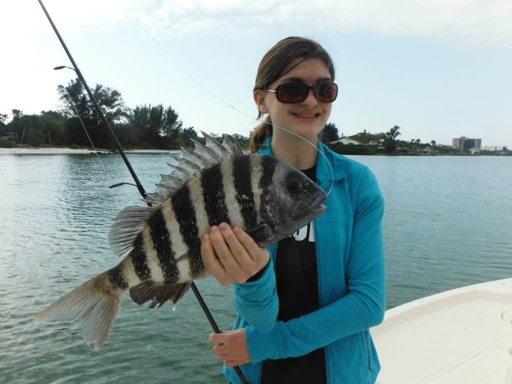 Sarasota sheepshead fishing