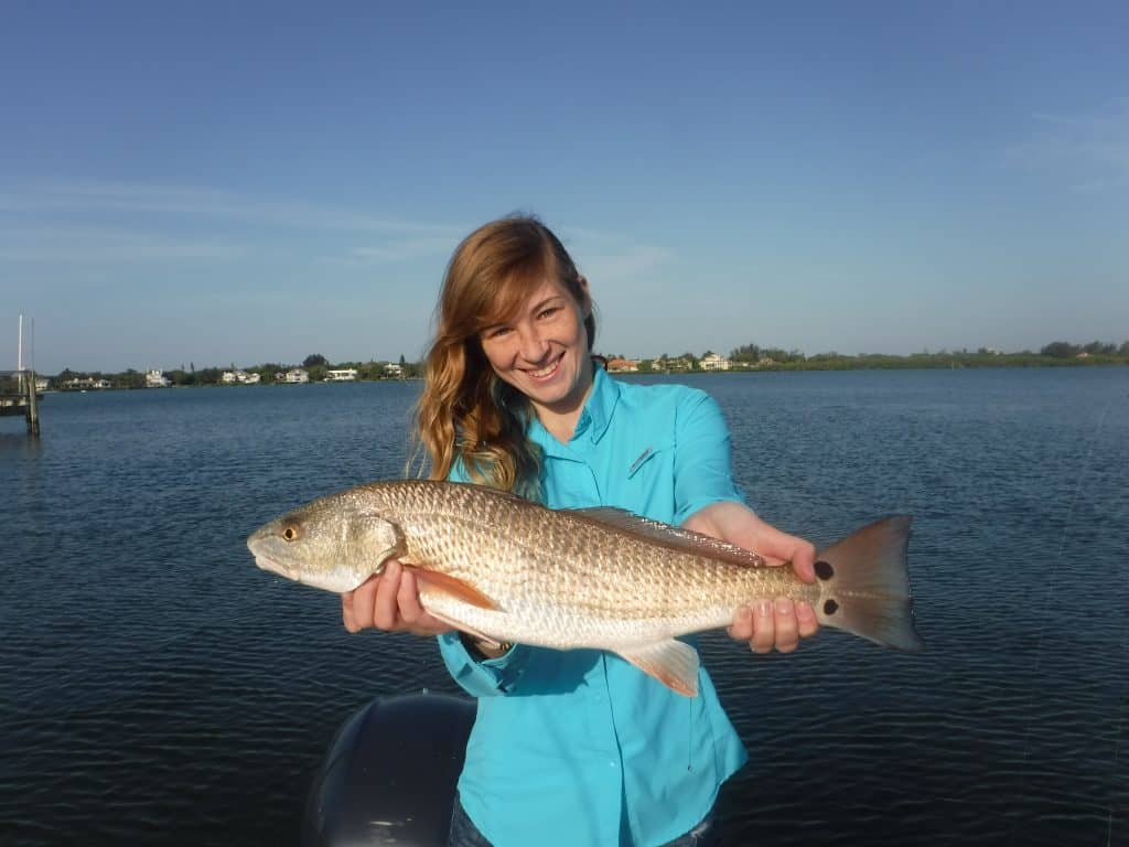Sarasota redfish