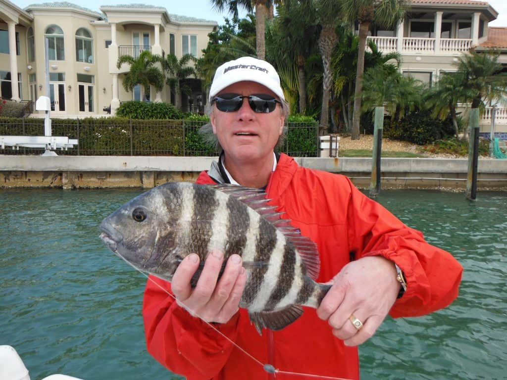 inshore fishing for sheepshead