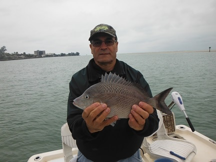 Sarasota bottom fishing