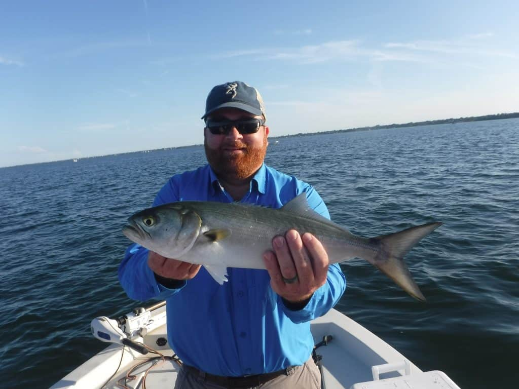 fishing for bluefish