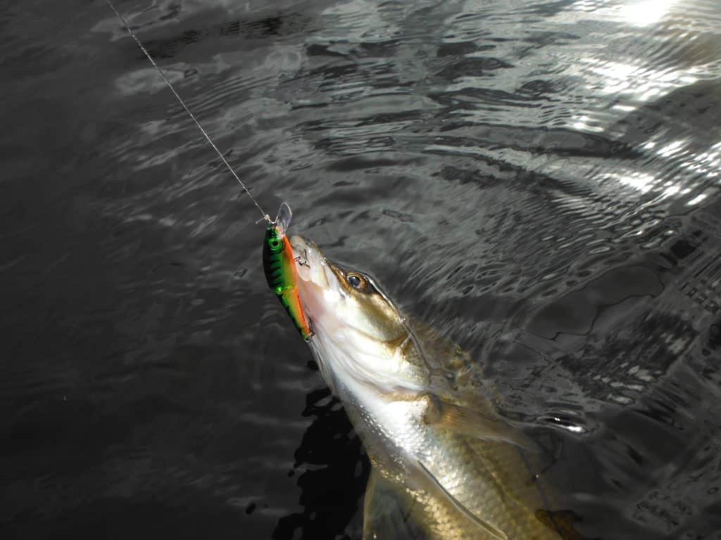 snook fishing tackle