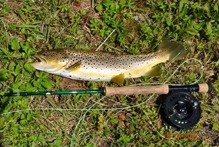 Franklin North Carolina brown trout