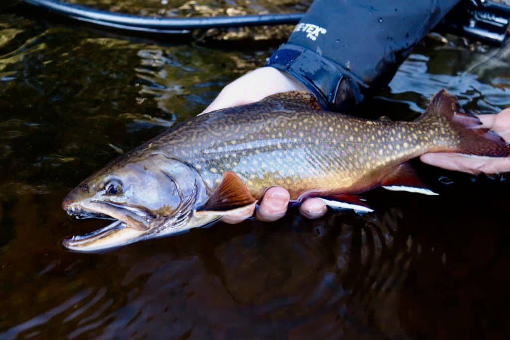 Brook trout fishing in Minnesota