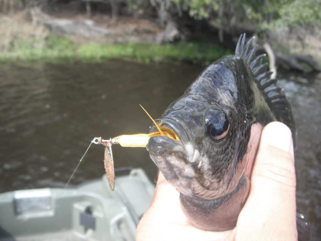 best panfish fishing lures