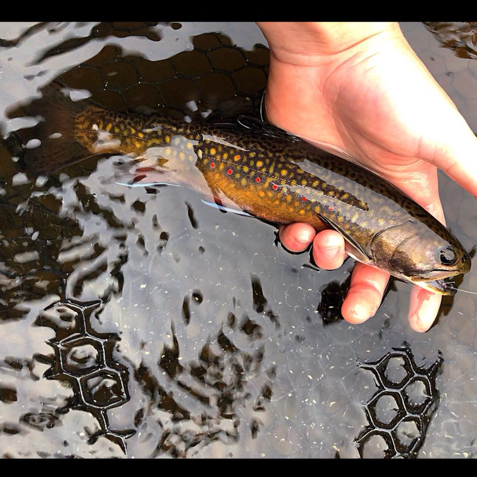 best brook trout lures