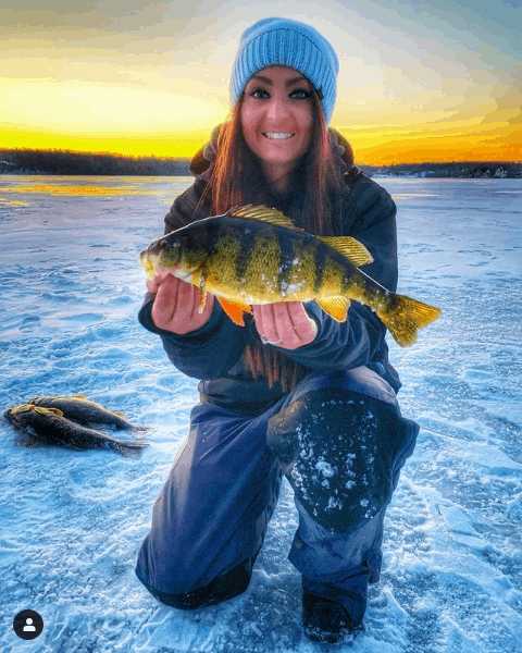 Michigan yellow perch