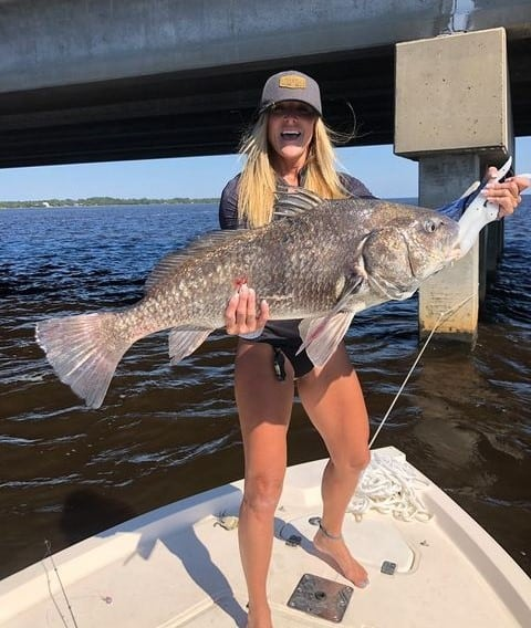 black drum in the Gulf of Mexico